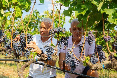 Weine von Arvanitidis Winery bei DER DORFLADEN